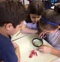 3ºs anos aprendem partes e gêneros da flor