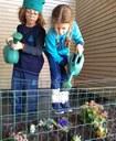 Canteiro de flores criado por alunos colabora com ambientação do Colégio