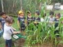 Unificando dois projetos, turma do Infantil aprende sobre costumes indígenas e faz plantio de milho