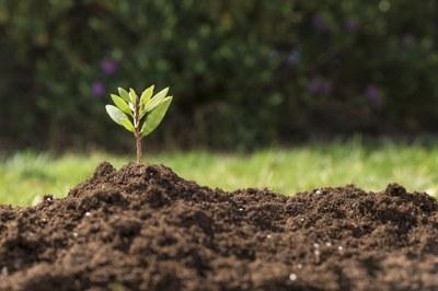 Cuidados com o meio ambiente: dever cristão